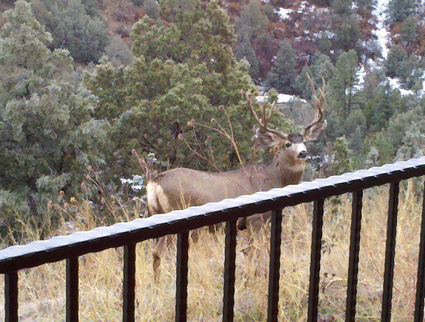 Mule Deer Hunting Lodge 03